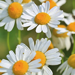 Fitoterapia: rimedi naturali per il tuo benessere